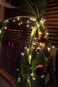 Christmas Lights on Banana Tree