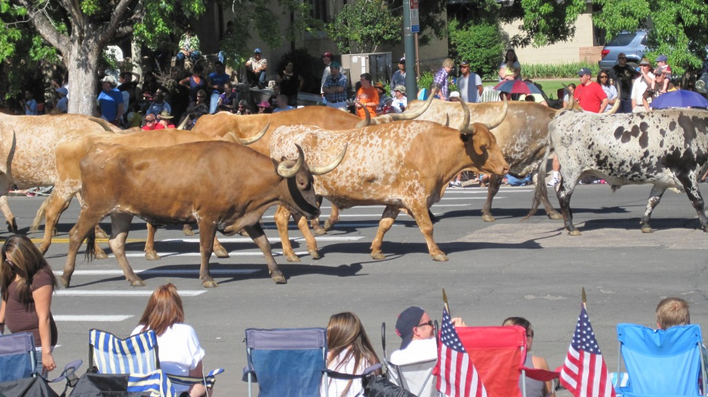 Longhorns-in-Parade