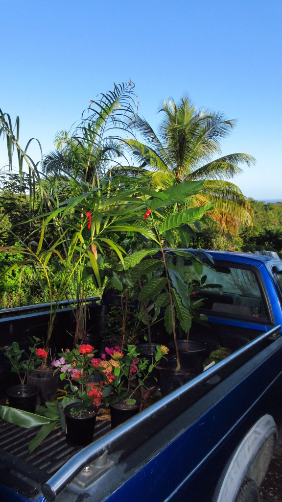 Fruit trees in truck