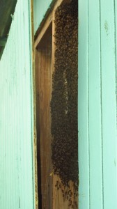 Bee time hive