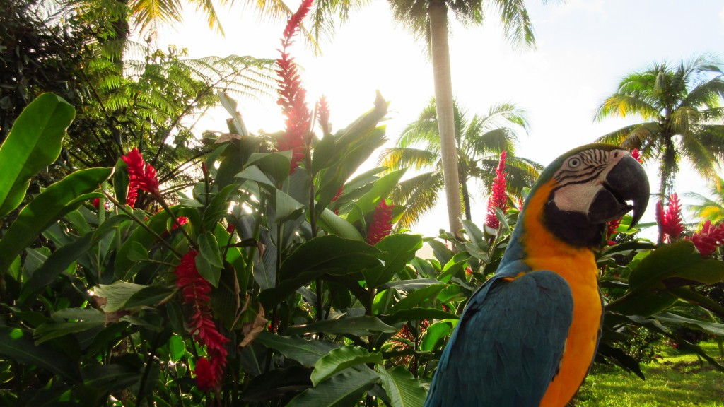 Paraiso with a parrot