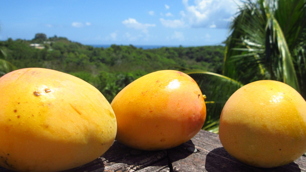 Mangoes and ocean