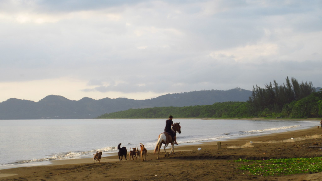 Dogs and Horse on Beach