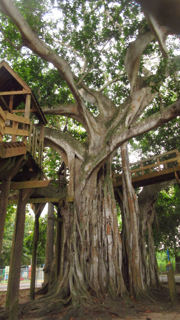 aguadilla-treehouse